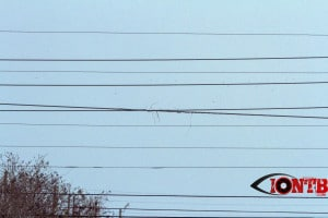 Frayed powerlines across McMullen Booth Road
